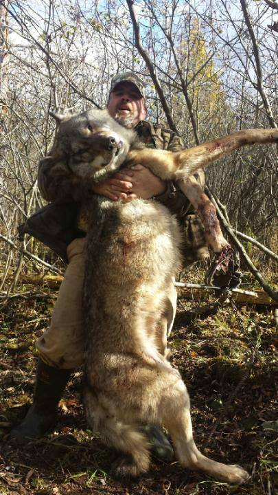 illegal-wolf-trapping