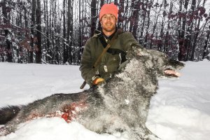 "Yet another hounder killed and gut shot wolf. Photo used via ""Fair Use."""