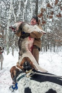 hounds_wolves_5