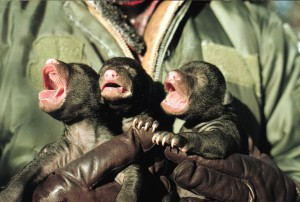 The Wisconsin DNR believes that killing bear cubs like this is the solution to everything. Photo via USFWS.