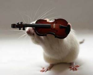 "Please allow this beautiful little rat to play a tiny violin to go along with your sorrow ""Sportsmen for Walker."""